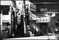 中野-12 - Camellia-shige Gallery 2