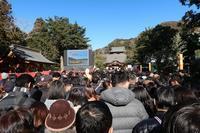 ■鶴岡八幡宮に初詣で19.1.2 - 舞岡公園の自然2