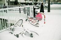 雪の降らない正月とナトリウムランプの街灯 - 照片画廊