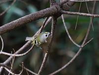 パホーマンス、、速い - ぶらり探鳥