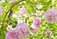 ラベンダー色のショートクライマー - カヲリノニワ