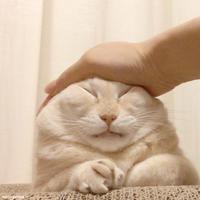 GOブロリー!!! GOGO!!! - 賃貸ネコ暮らし|賃貸住宅でネコを室内飼いする工夫