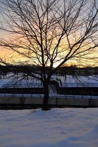 朝日を浴びて - 新幹線の写真