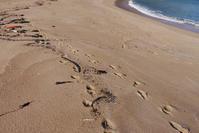 アオイガイ探検隊北へ! - Beachcomber's Logbook