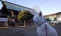 初詣は氏神様へ - 小太郎の白っぽい世界