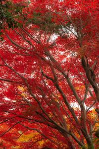 紅の世界へ - 気ままにお散歩