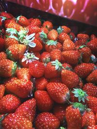 very very strawberry ♪ - IL EST TROP TARD     時は過ぎゆく ...