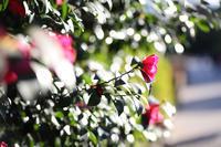 新春の植物園 - 写真の記憶