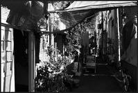 中野-13 - Camellia-shige Gallery 2