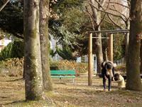 『樹見散歩~(本荘公園にて)』 - 自然風の自然風だより