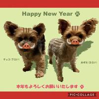 新年のご挨拶 - おしっこジャンプ ~うさワン日記?