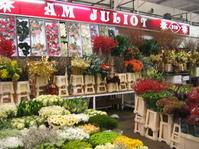 パリのランジス市場① - sola og planta ハーバリストの作業小屋