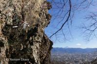真冬の散歩道:イチモンジフユナミシャク雌に会う - NATURE DIARY