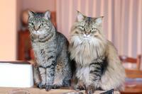 「かぼすちゃん一日花屋さん2019」のお知らせ - きょうだい猫と仲良し暮らし