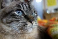 猫とお雑煮 - 夢風 御朱印日記