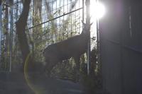 初詣 - 動物園へ行こう