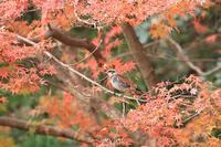 蓮池で出会った鳥さんたち・1♪ - happy-cafe*vol.2