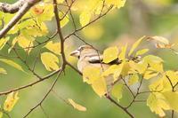 蓮池で出会った鳥さんたち・2♪ - happy-cafe*vol.2