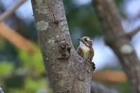 蓮池で出会った鳥さんたち・3♪ - happy-cafe*vol.2