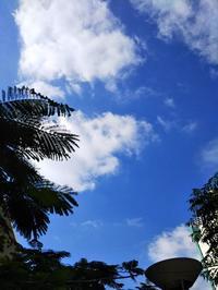 しぶんぎ座流星群・どん曇りなのはいつものこと - 亜熱帯天文台ブログ