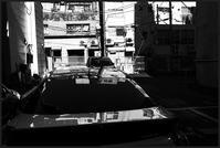 中野-14 - Camellia-shige Gallery 2