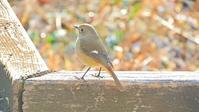 のがわ散歩 - 山と鳥を愛するアナパパ