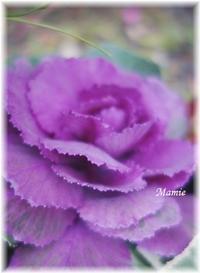 新春の迎え花 - おだやかに たのしく Que Sera Sera