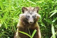 初夏の多摩動物公園~くつろぎシマオ一家とオランウータン「ミンピー」の思い出 - 続々・動物園ありマス。
