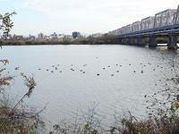 1月4日夕刻に淀川で撮影しました。 - 写真で楽しんでます! スマホ画像!