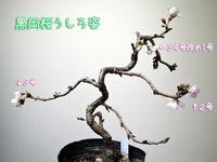 ぽかぽかサタデー - サモエド クローカのお気楽日記