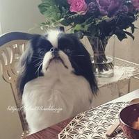 お正月の犬手作りごはん☆鶏ムネ冷凍 - 狆の茶々丸