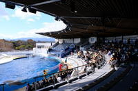 京都水族館⑧ - 平凡な日々の中で