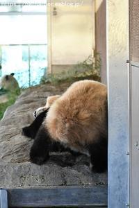 2018年12月白浜パンダ見隊その5 エンペ雛ご飯 - ハープの徒然草