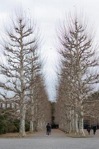 冬の日の新宿御苑〜③フランス庭園からラストへ - 柳に雪折れなし!Ⅱ