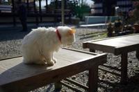 町角ニャンコ・梅宮大社のニャンコ達 - デジタルな鍛冶屋の写真歩記