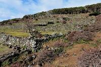 三度、野崎島 - ふらりぶらりの旅日記