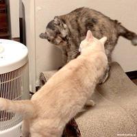 GOキューちゃん - 賃貸ネコ暮らし|賃貸住宅でネコを室内飼いする工夫