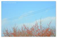 赤い実の。 - Yuruyuru Photograph
