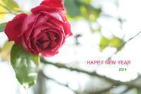 HAPPY NEW YEAR - わんまいる*さんぽみち