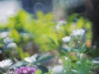 昭和記念公園ハーブ園の花など - 光の音色を聞きながら Ⅳ
