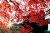 京の紅葉2018彩りの南禅寺境内 - 花景色-K.W.C. PhotoBlog