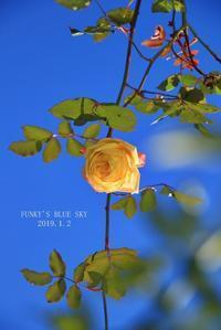 2019・新年を祝って - FUNKY'S BLUE SKY