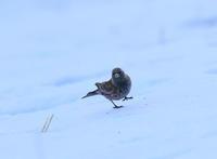 1月6日、今日は寒いのと疲れていたので休鳥日に決めました。家で過去の写真の整理を行い昔の画像を見ていました、撮り鳥を始めて6年少しは進歩しているのかな、昔の写真をアップしてみました。 - 鳥撮り日誌