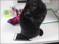 猫あるある - あずきのばあばの、のんびり日記