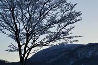 ー6度の朝:頓原2019.1.4 - じじ & ばば の Photo blog