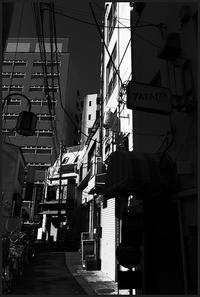 中野-16 - Camellia-shige Gallery 2