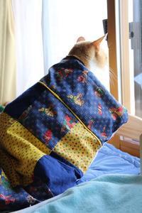 寝起きドッキリ - ぎんネコ☆はうす