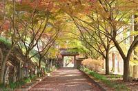 金蔵院 紅葉 1 - photograph3