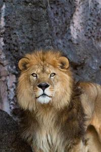百獣の王 - ★まなブログ★