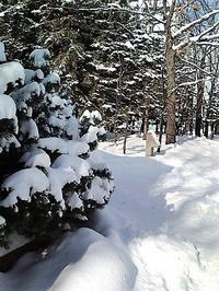 雪景色 - はあと・ドキドキ・らいふ